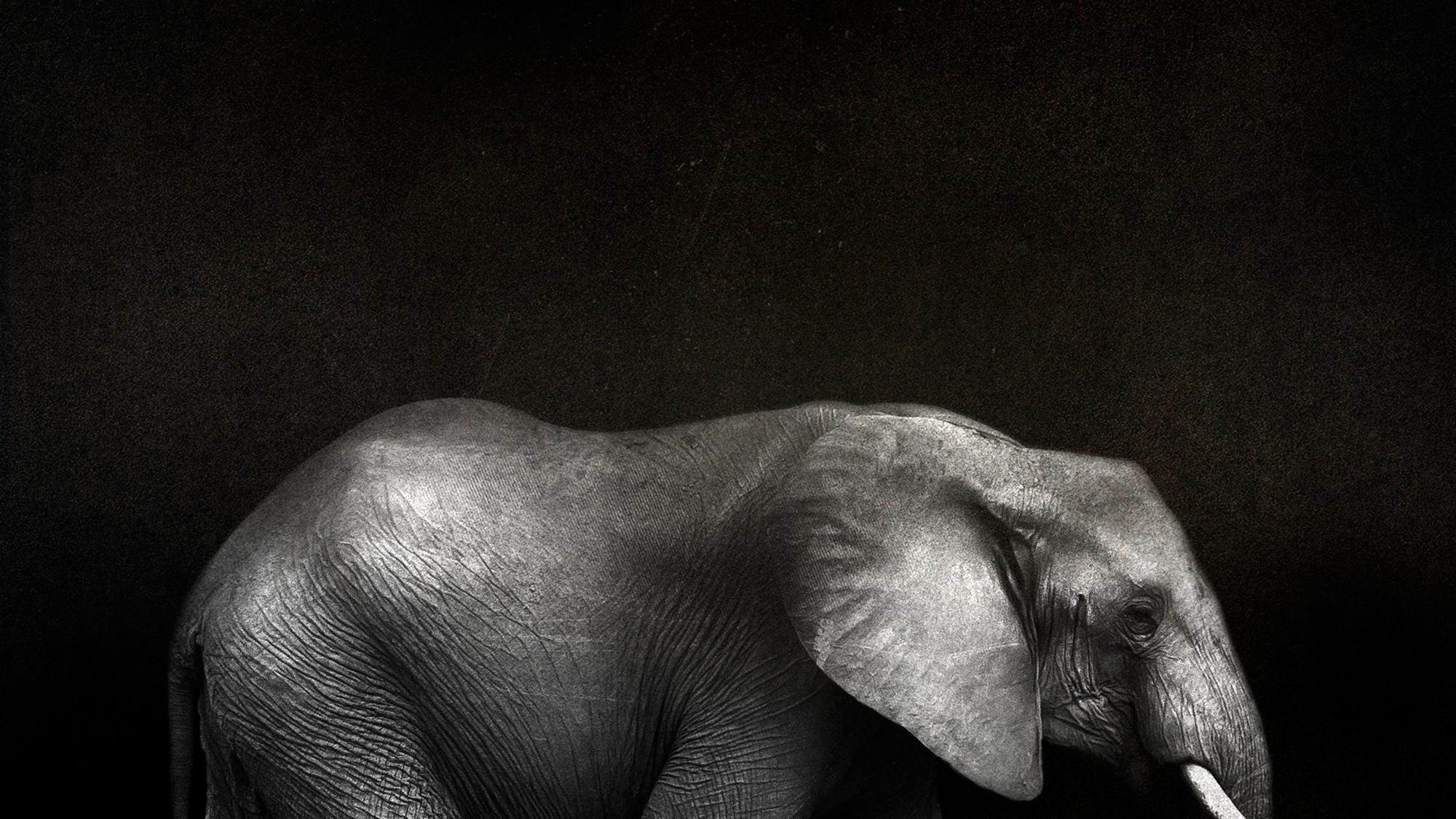 96 Elephants