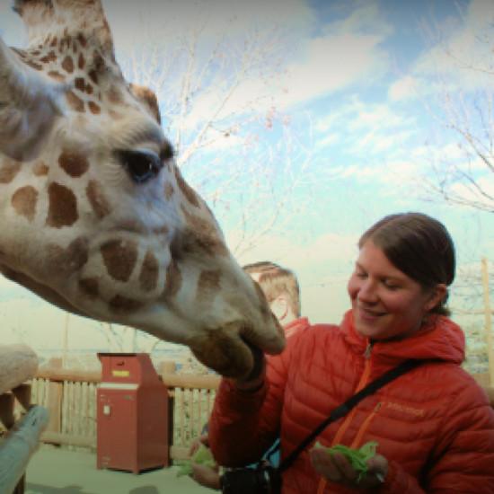 CMZ Giraffe