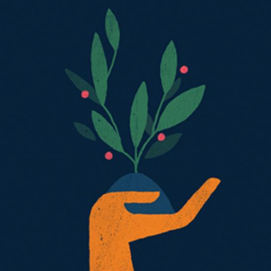 Mentorship Plant
